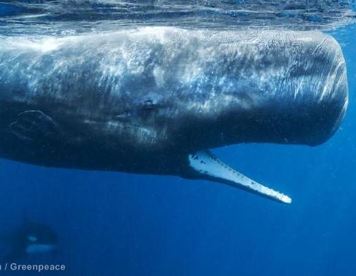 De Moby-Dick al cambio climático…